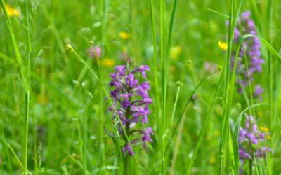 Klinik Hohe Mark: Orchideen im Park